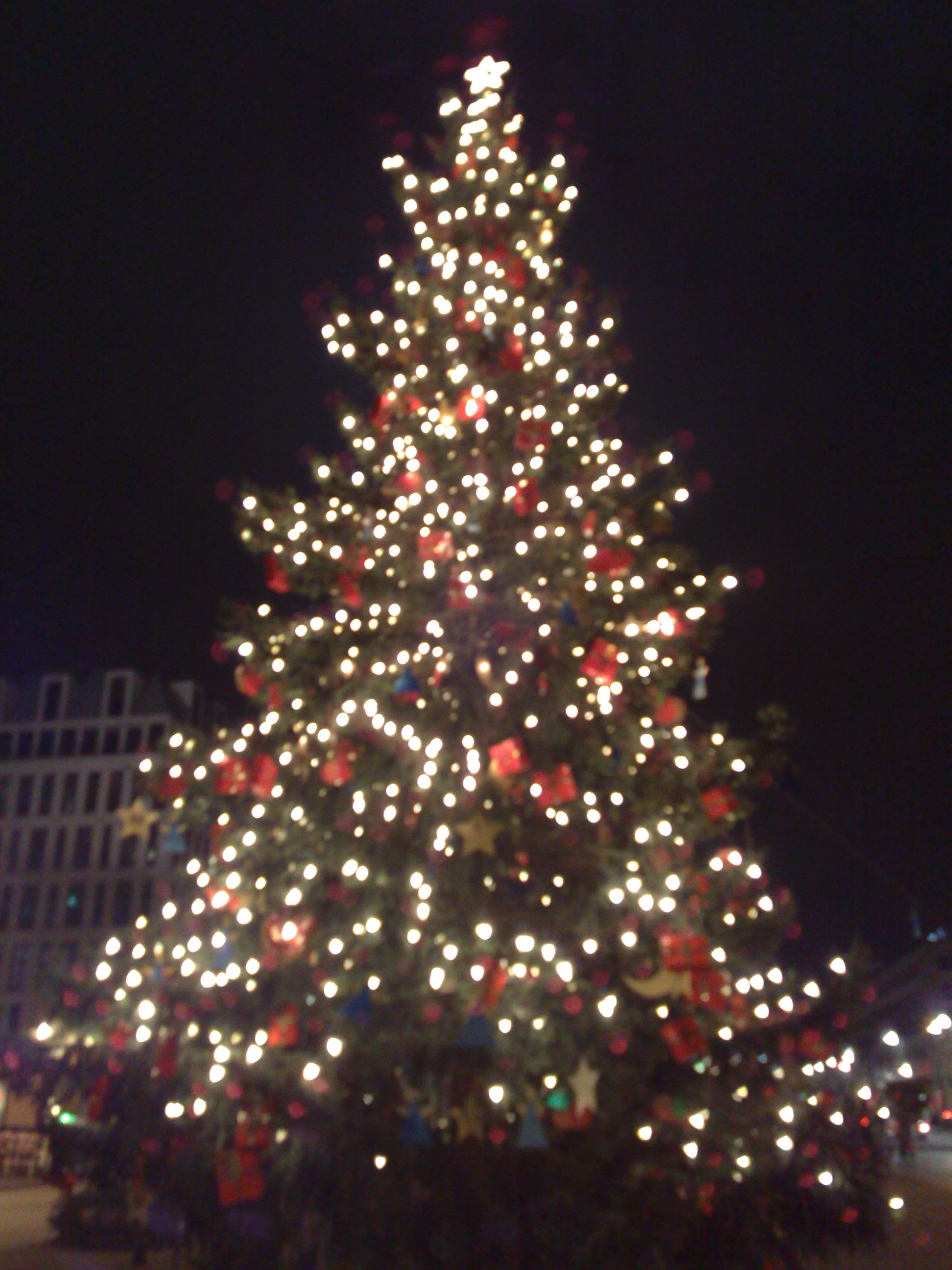 Nice Christmas Tree an example of perfect symmetry | melodic ambience